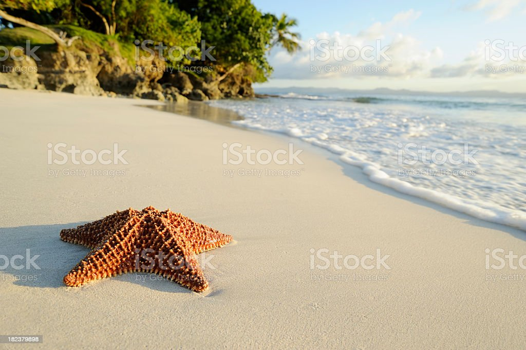 Starfish on beach by the ocean on a sunny day royalty-free stock photo