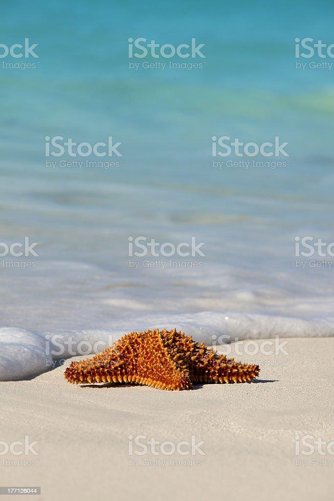 Starfish on Beach royalty-free stock photo