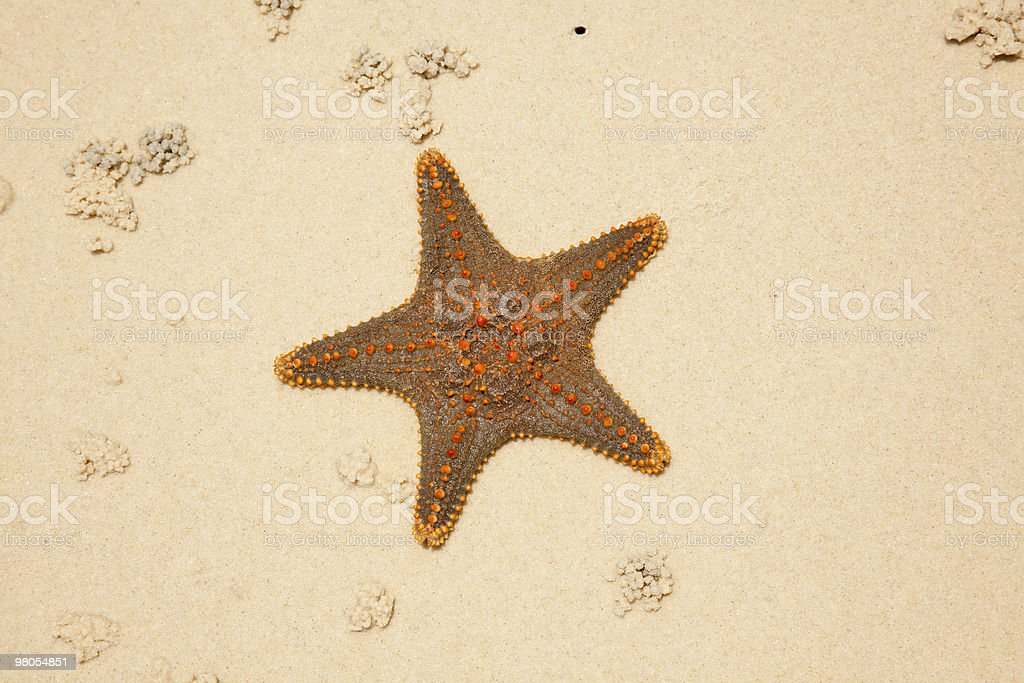 starfish on beach royalty-free stock photo