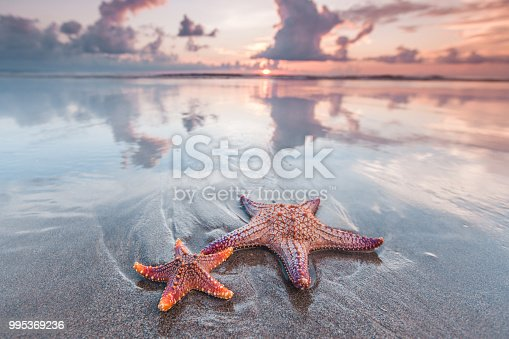 Two starfish on the beach and beautiful sunset over sea