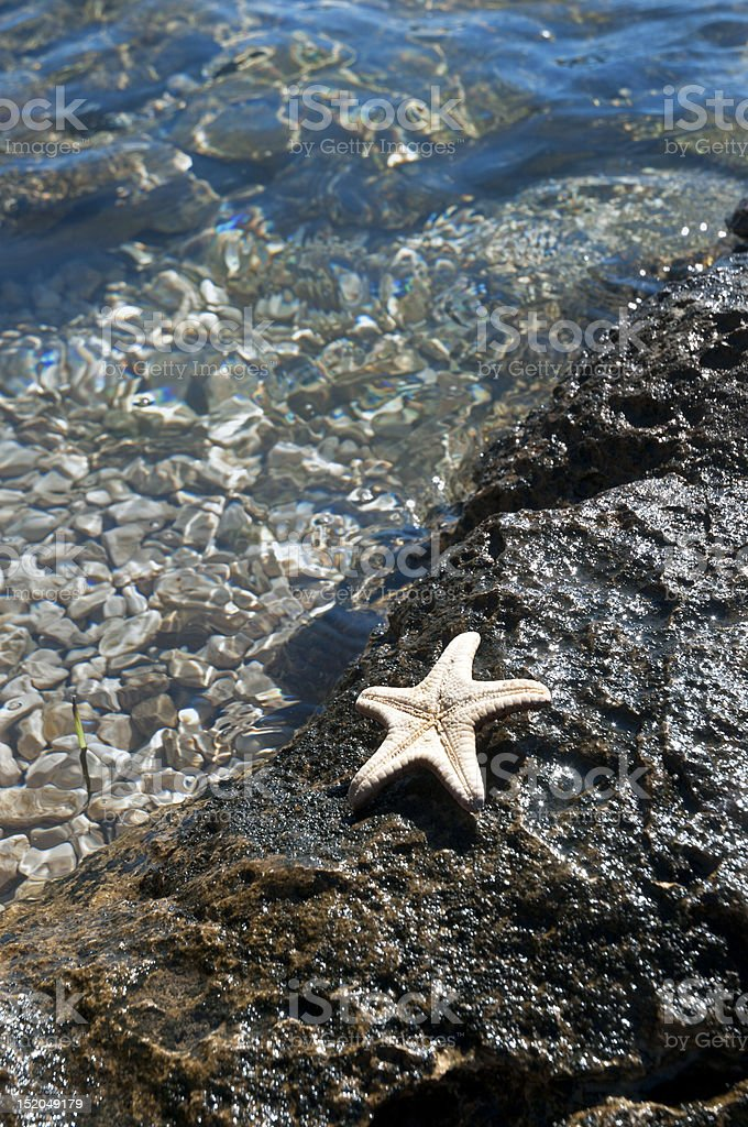 Starfish on coastline rock near clear sea water stock photo