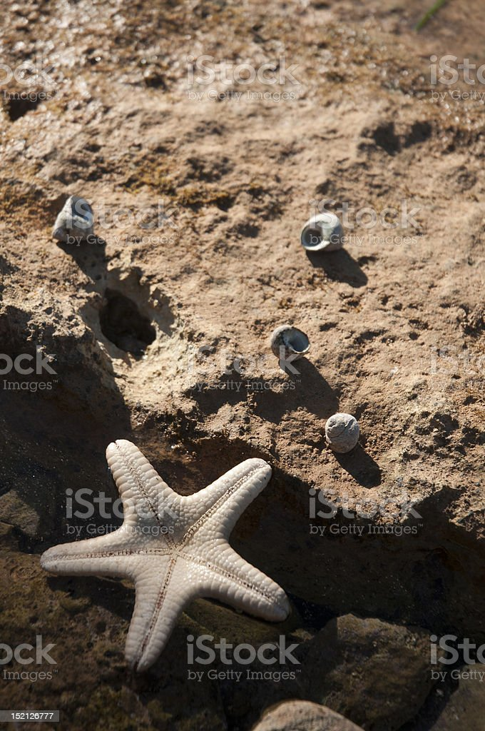 starfish on rocky beach coastal shore stock photo