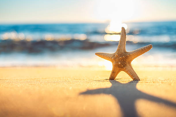 Starfish on the beach at sunrise Starfish on the beach at sunrise starfish stock pictures, royalty-free photos & images