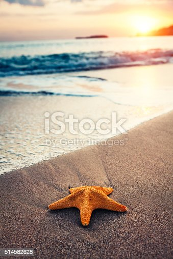 Starfish on the sandy beach at sunrise.