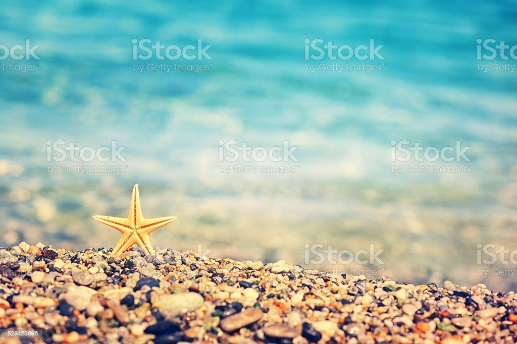 Starfish On The Beach stok fotoğrafı