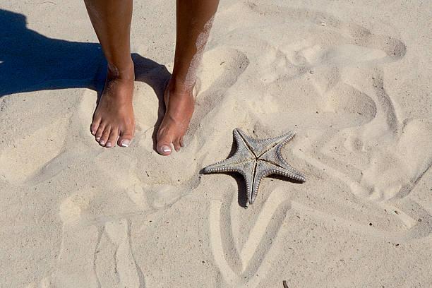 starfish on the beach - byakkaya stok fotoğraflar ve resimler
