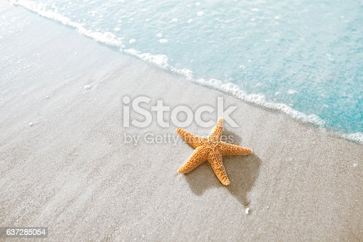 Starfish on the beach in Hilton Head, South Carolina