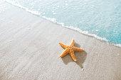 ヒトデのビーチ