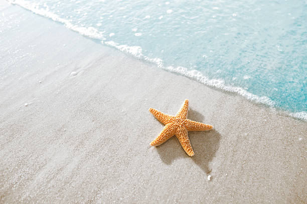 Starfish on the beach Starfish on the beach in Hilton Head, South Carolina starfish stock pictures, royalty-free photos & images