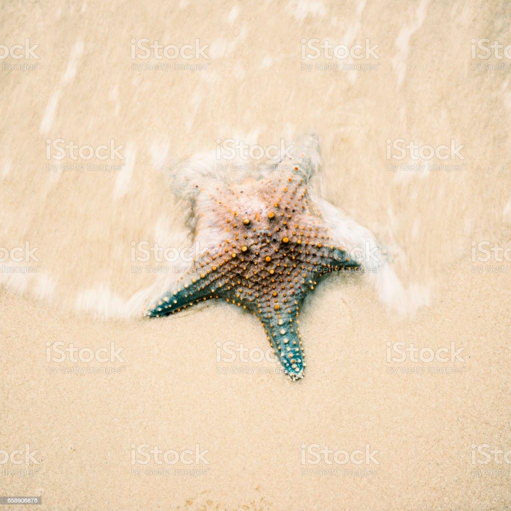 Starfish on the beach sand. Close up. stock photo