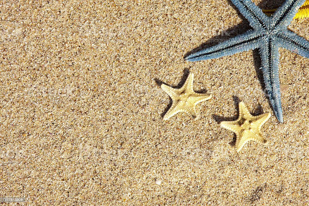starfish on the beach sand royalty-free stock photo