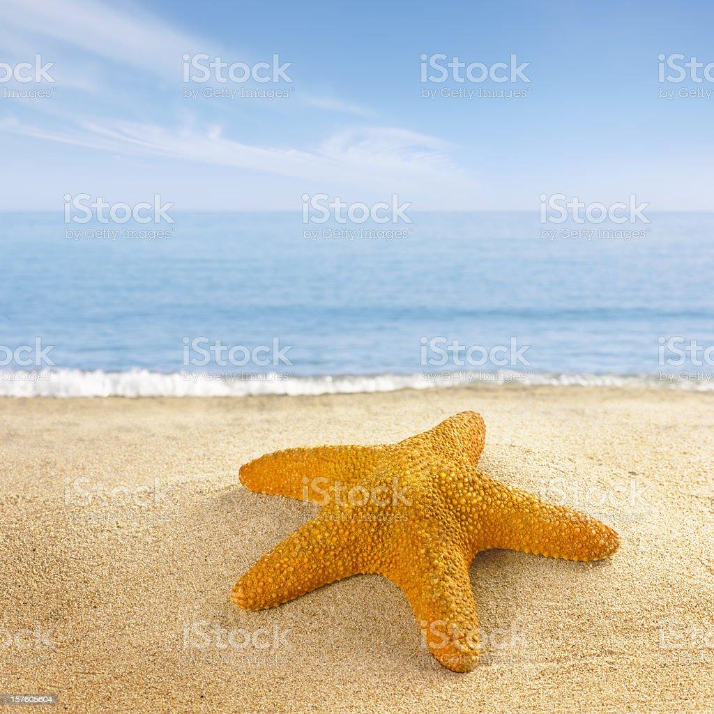 Starfish on the beach shore royalty-free stock photo