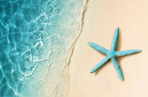 Starfish on the sand beach and ocean as background. Summer beach. Starfish on the sand beach and ocean as background. Summer beach starfish stock pictures, royalty-free photos & images