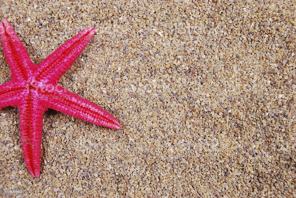 starfish on the sand royalty-free stock photo