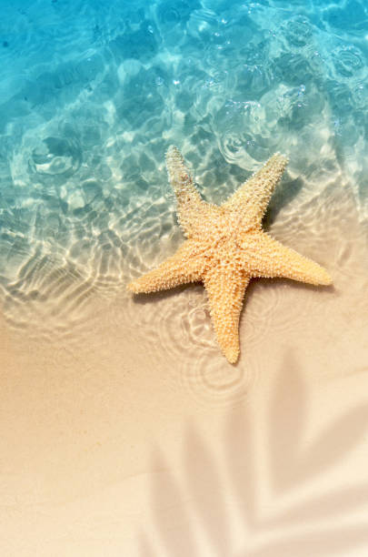 starfish on the summer beach in sea water. Starfish on the summer beach in sea water. Summer background. Summer time. starfish stock pictures, royalty-free photos & images