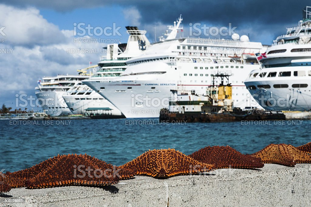 Starfish on wall in front of docked cruise ships stock photo