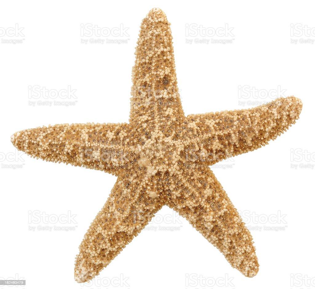 Estrella de mar foto de stock libre de derechos