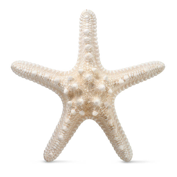 Starfish Starfish.Similar photographs from my portfolio: starfish stock pictures, royalty-free photos & images