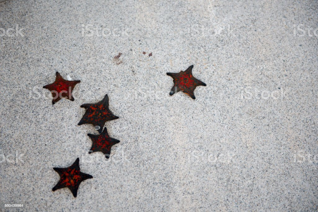 5 starfish stock photo