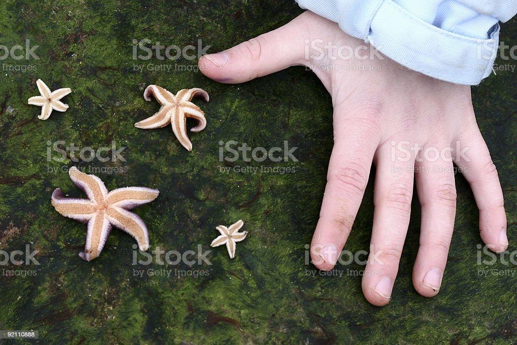 starfish royalty-free stock photo