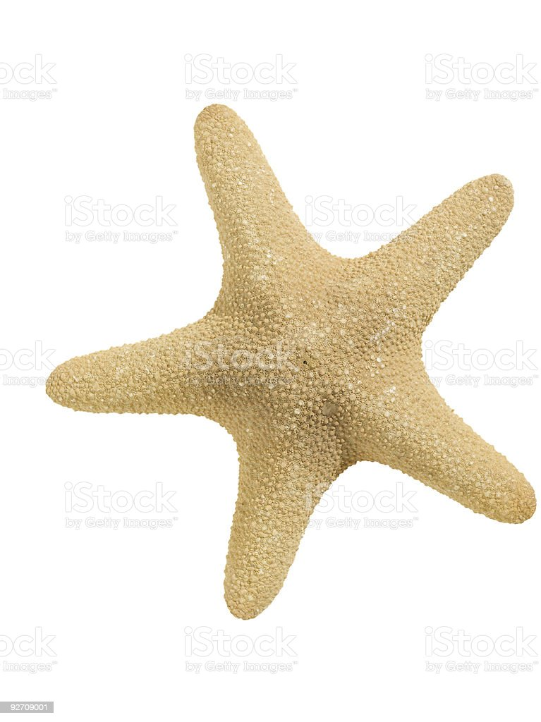 Starfish (clipping path) stock photo