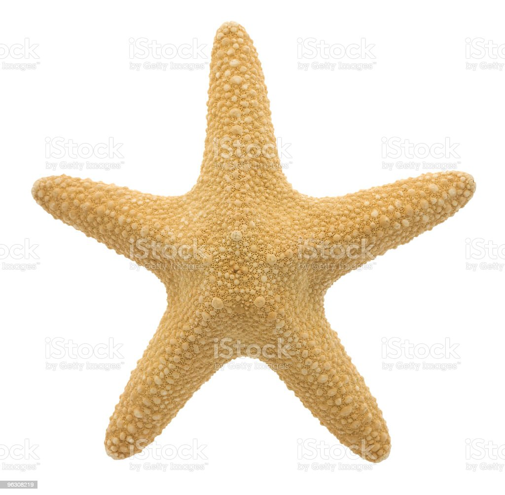 Starfish (XL) royalty-free stock photo