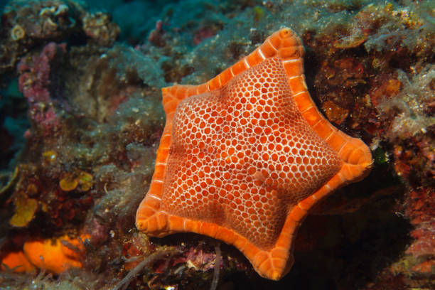 Starfish Sea life Underwater sea star Scuba diver point of view stock photo