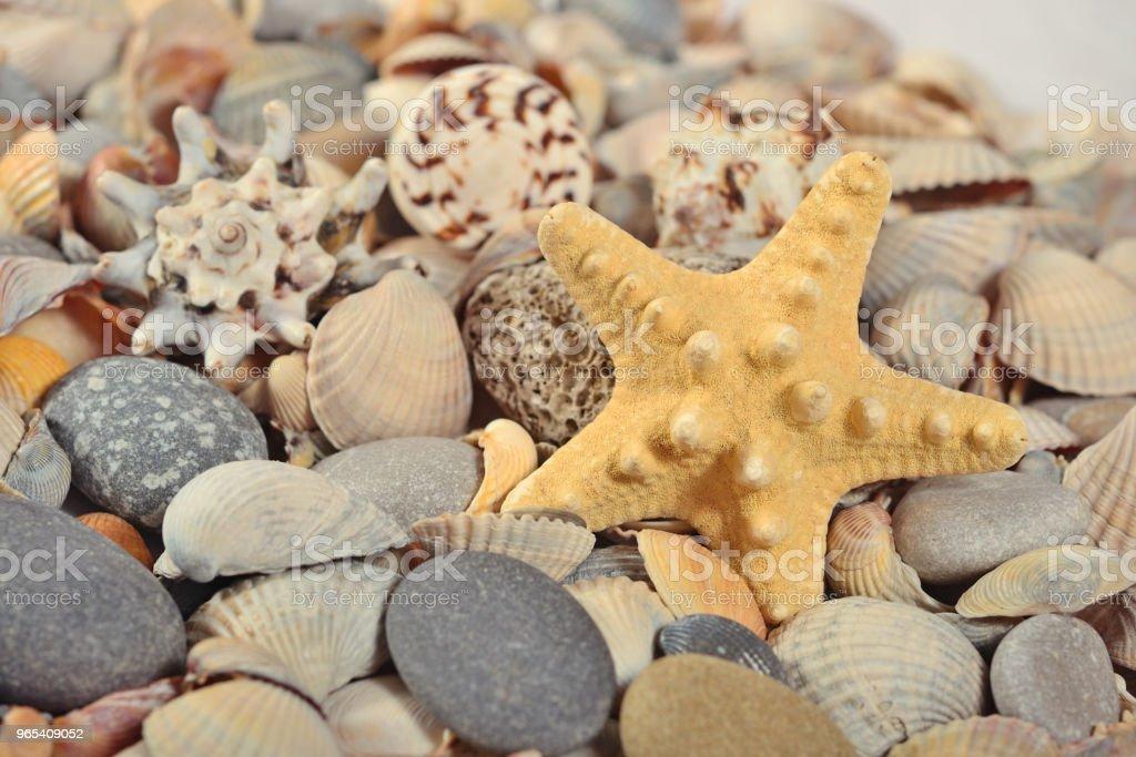 Starfish, seashells and pebbles close-up royalty-free stock photo