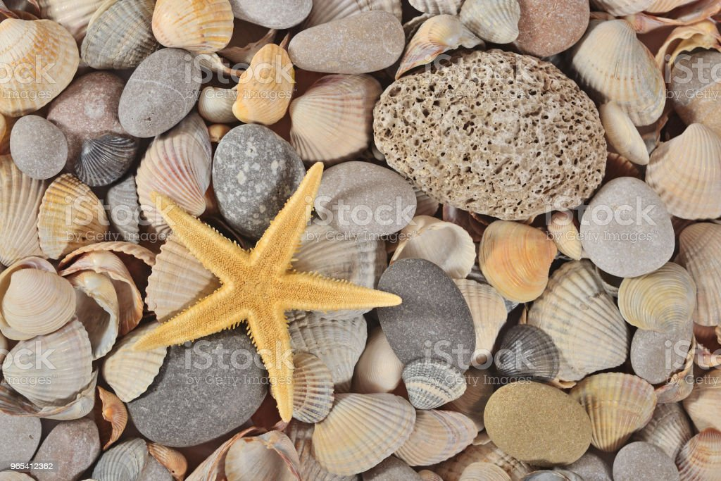 Starfish, seashells and pebbles close-up zbiór zdjęć royalty-free
