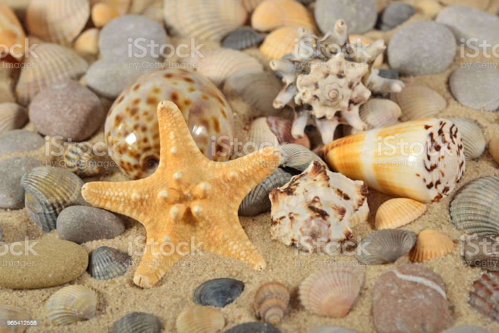 Starfish, seashells and pebbles close-up royalty-free stock photo