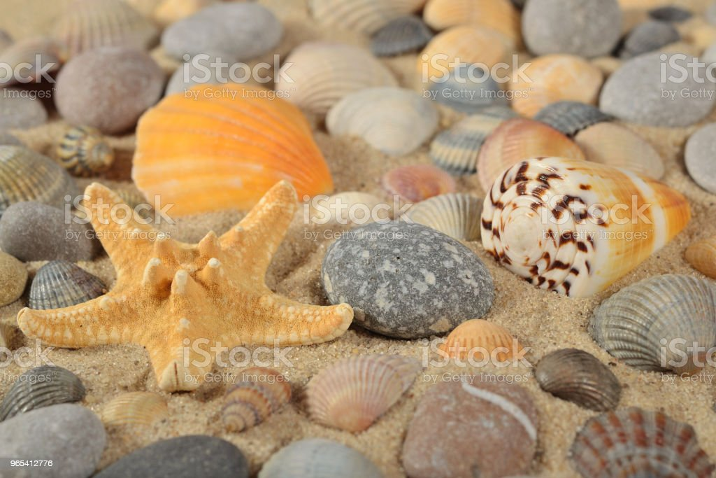 Starfish, seashells and pebbles close-up zbiór zdjęć royalty-free