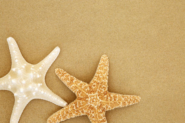 Starfish Seashells on Beach Sand Starfish seashells on beach sand forming a background with copy space starfish stock pictures, royalty-free photos & images