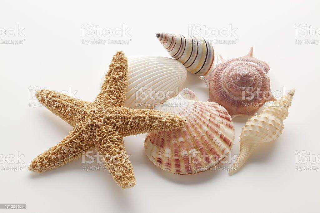 Starfish & Shells royalty-free stock photo