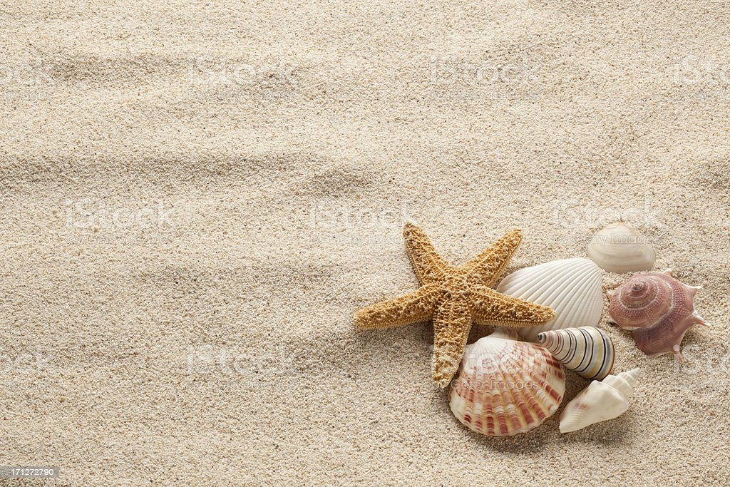 Starfish & Shells stock photo