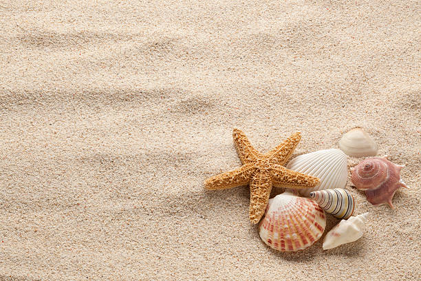 starfish & shells - animal shell stock pictures, royalty-free photos & images