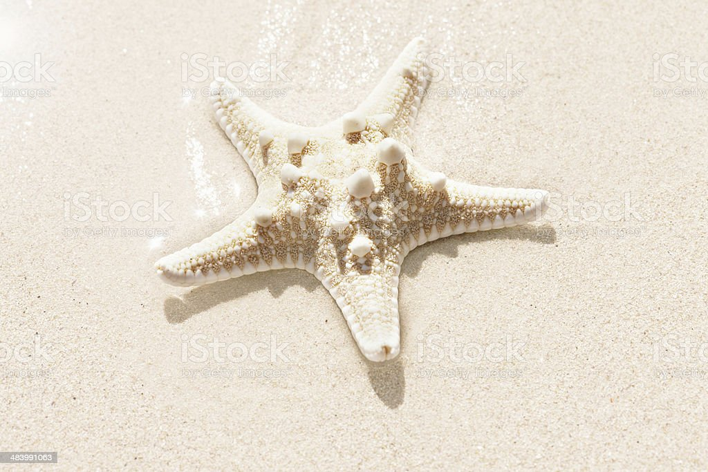 Starfish solo on sandy beach royalty-free stock photo