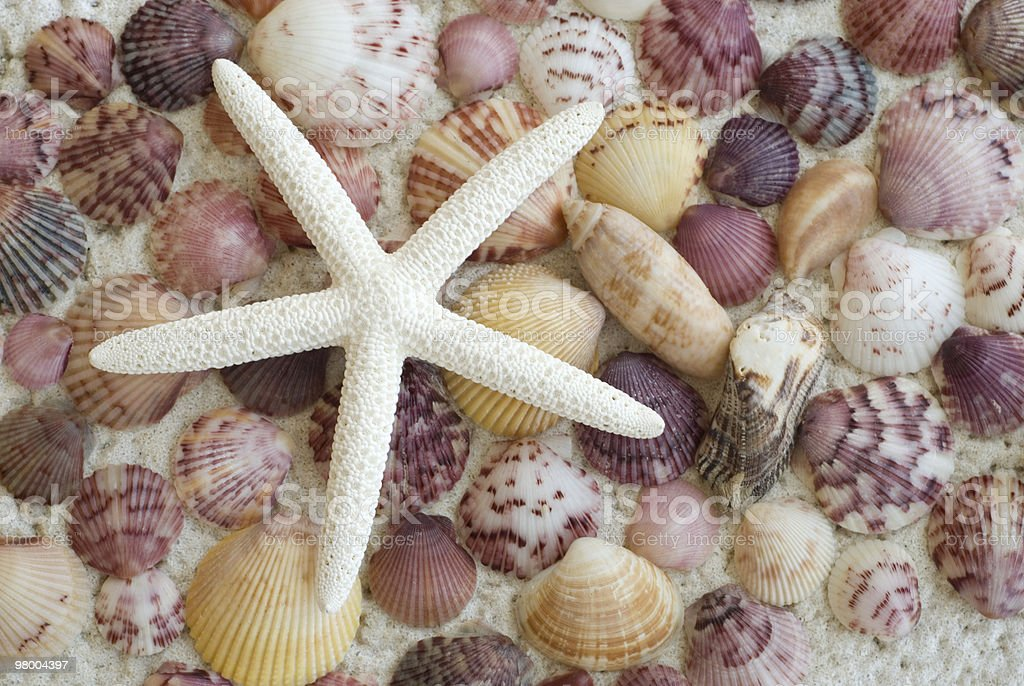 Starfish with Colorful Seashell Background royalty-free stock photo
