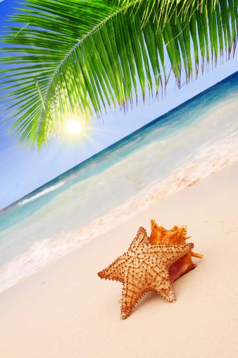 Sunshine in the Caribbean beach.Caribbean Dream beach and palm.Starfish with  shell, beach and seascape.