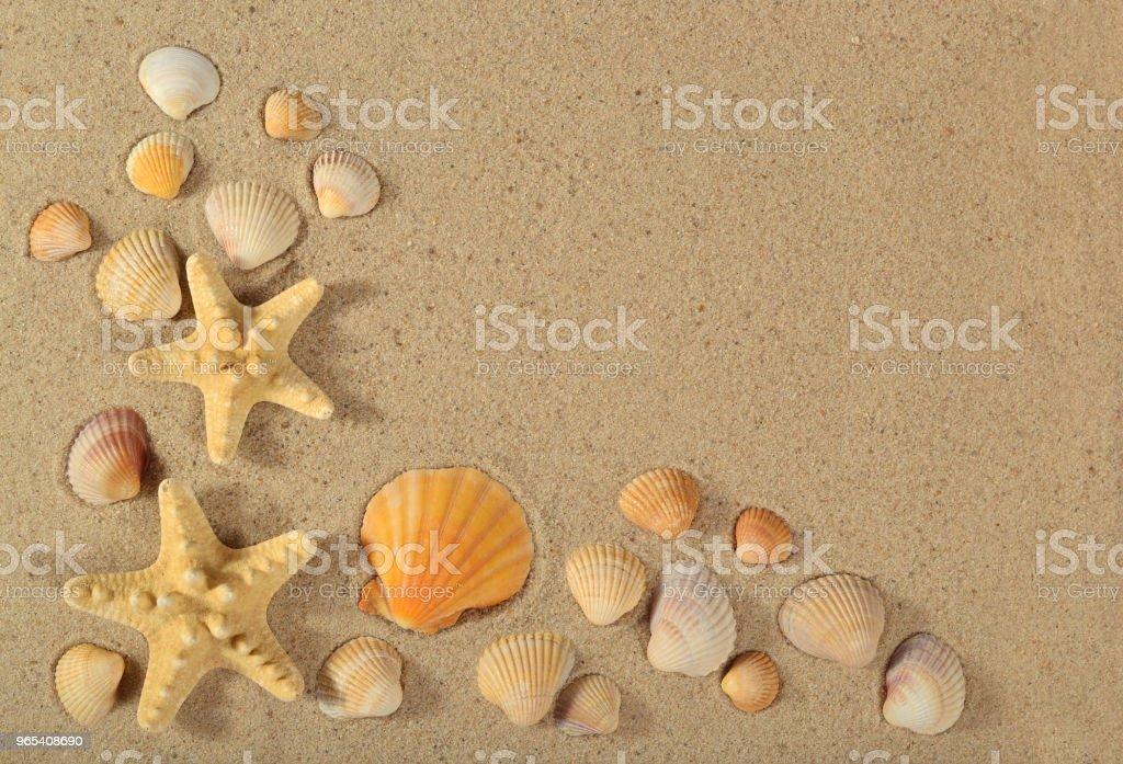 Starfishes and seashells close-up on a sand zbiór zdjęć royalty-free