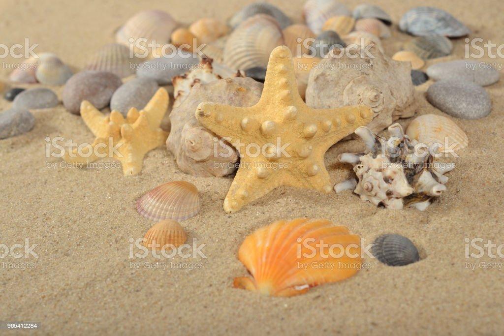모래에 starfishes 및 조개 클로즈업 - 로열티 프리 광물질 스톡 사진