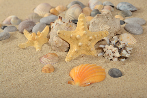 모래에 Starfishes 및 조개 클로즈업 광물질에 대한 스톡 사진 및 기타 이미지