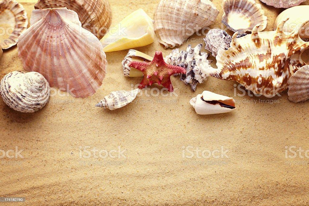Seesterne in unglaublicher Vielfalt beheimatet sind und Muscheln auf sand – Foto