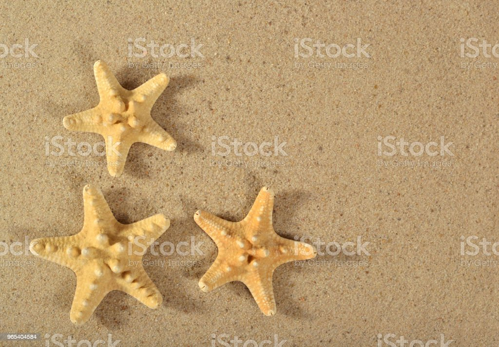 Starfishes close-up on a sand royalty-free stock photo