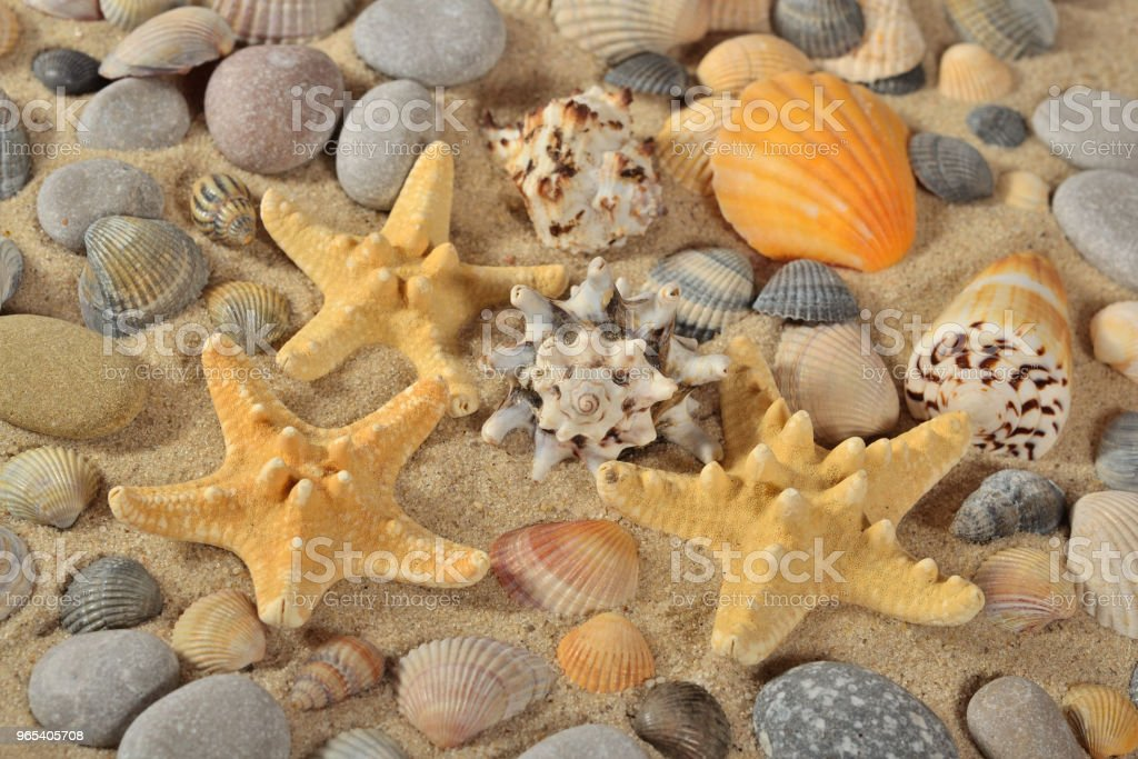 Starfishes, seashells and pebbles close-up zbiór zdjęć royalty-free