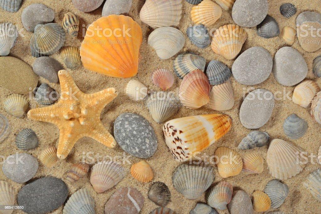 Starfishes, seashells and pebbles close-up royalty-free stock photo