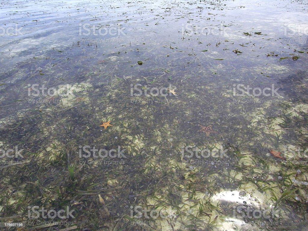 Starfishs and Seaweeds royalty-free stock photo