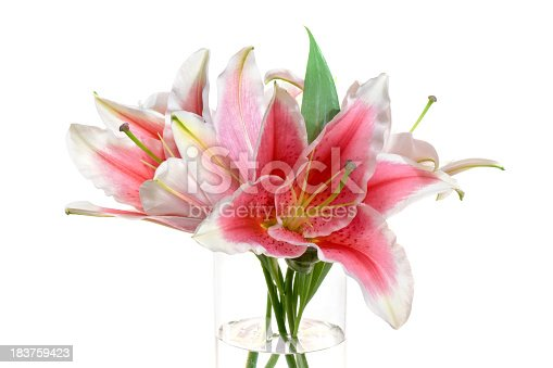 Reddish-white lily in clear vase on white background.