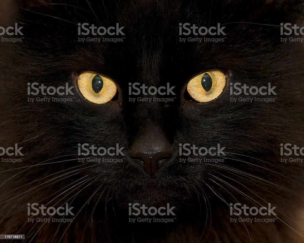 Staring black cat stock photo