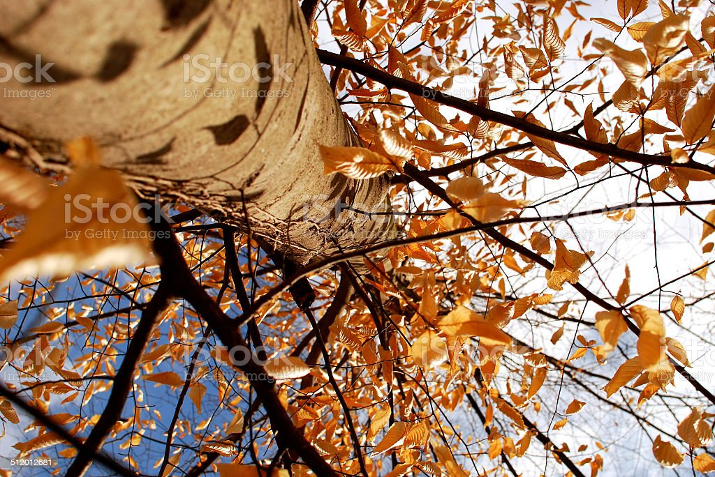 Staring up the Trunk of a Tree in the Arboretum stock photo