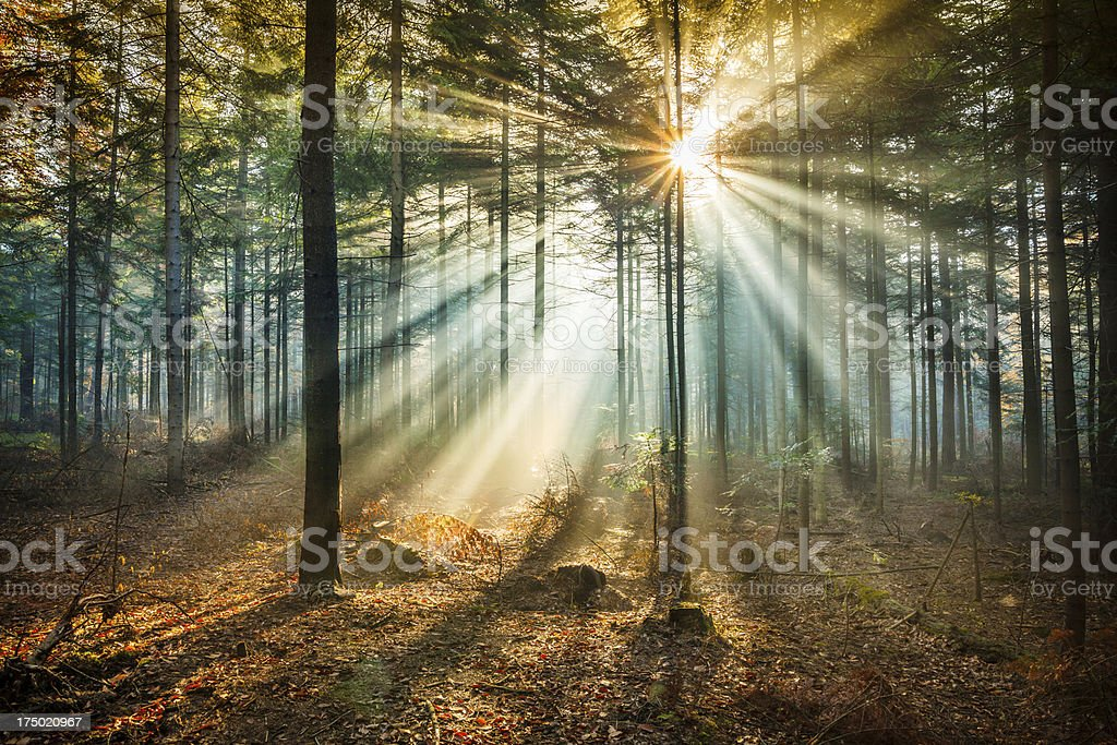 Star-like flare and Sun Beams - Misty forest Star-like flare and Sun Beams - Misty forest Autumn Stock Photo